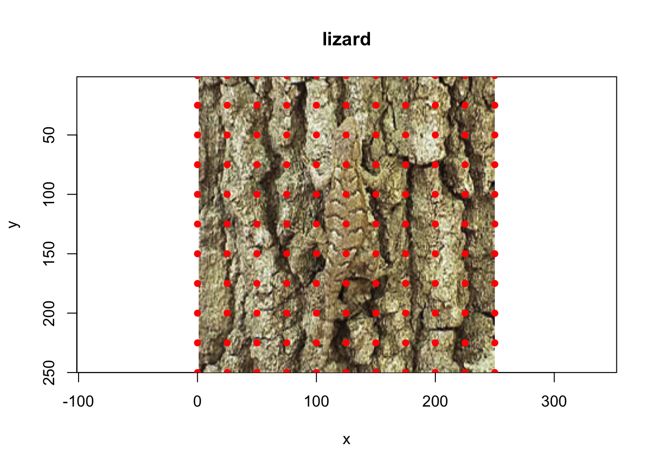 A cryptic lizard, along with a possible sampling grid for spectral measurement.
